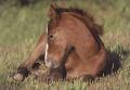 Kamera Pocztówka Zwierzęta (954049)