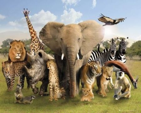 Group of wild animals together - photo#29