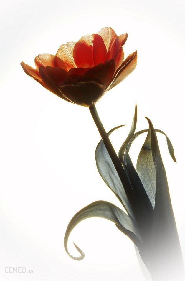 Elegancja - obraz w ramie 40x60cm